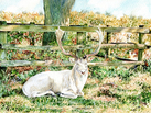 Deer at Bradgate Park, Leicestershire