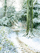 Snowy Woodland Walk on Box Hill